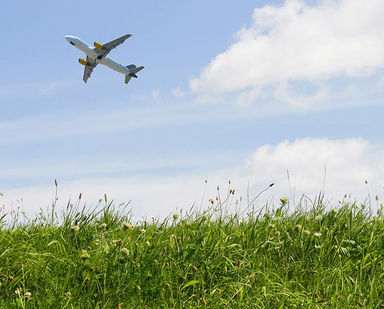 basic economy airfare