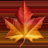 Maple leaf emoji search KAYAK