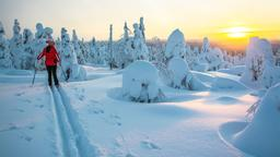 Find cheap flights from San Jose to Lapland