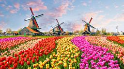 Find cheap flights from Lynchburg to North Holland