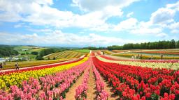 Find cheap flights from Chicago to Hokkaido Prefecture