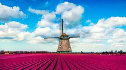 Find cheap flights from California to Netherlands