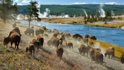 Find cheap flights from Hartford to Yellowstone National Park