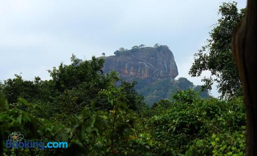 The Thick Forest - Sigiriya