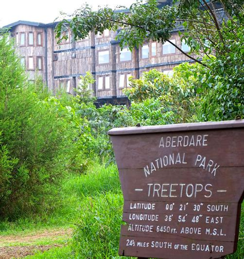 Treetops Lodge - Nyeri - Building