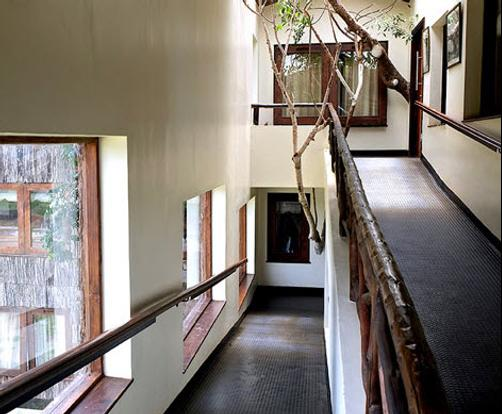 Treetops Lodge - Nyeri - Balcony