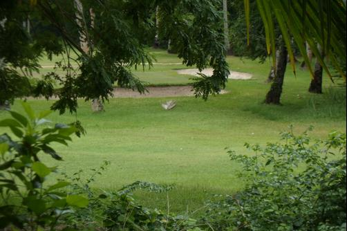 Reef Holiday Apartments - Mahe Island - Golf course