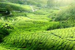 Deals for Hotels in Cameron Highlands
